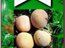 Miracle Ananas Kavun Tohumu