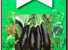 Miracle Aydın Siyahı Patlıcan Tohumu