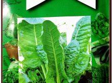Miracle Geniş Yaprak Pazı Tohumu