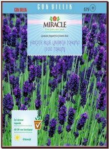 Miracle Hidcote Blue Lavanta Tohumu
