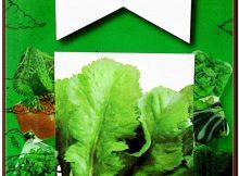 Miracle Toros Yeşili Geniş Yaprak Tere Tohumu