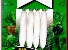 Miracle Uzun Beyaz Turp Tohumu