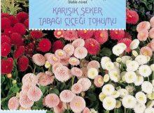 şeker tabağı çiçeği tohumu
