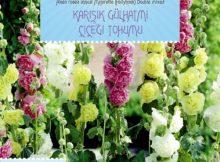 gülhatmi çiçeği tohumu