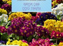 karışık çuha çiçeği tohumu