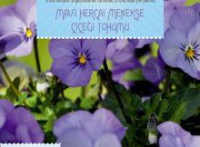 mavi hercai menekşe çiçeği tohumu