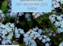mavi unutma beni çiçeği tohumu